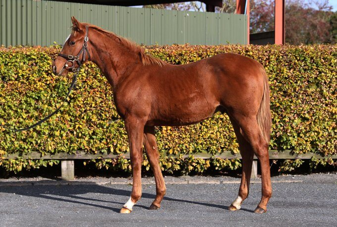 Own-Brother To Ghaiyyath Tops Record November Foal Sale at €1,200,000