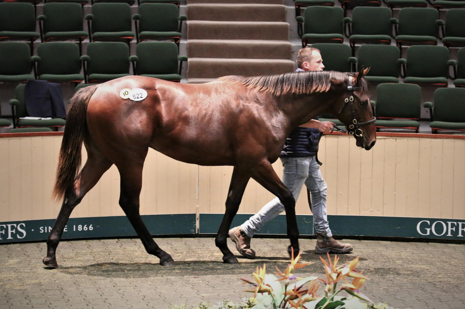 Exceed And Excel Colt Tops The Sportsman's Sale At €135,000