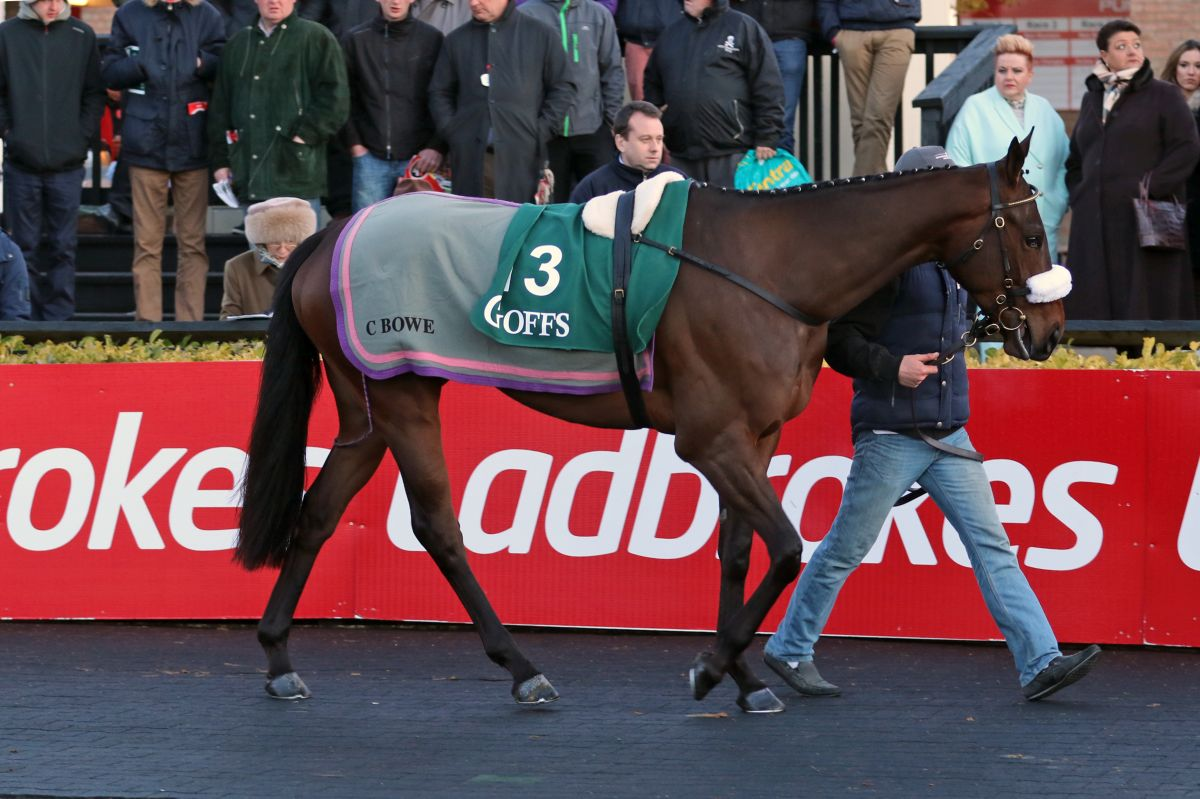 ef89299c9b03 Strong Line Up For Goffs Punchestown Sale